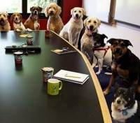 McKinley Dog Park Advisory Council Meeting